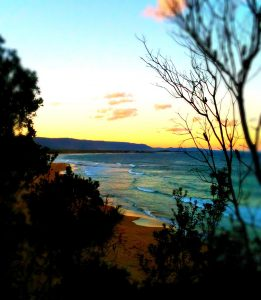 Bushcare Summer Sunset Walks 2018