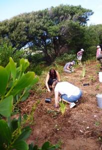Volunteers at Werri Dunes