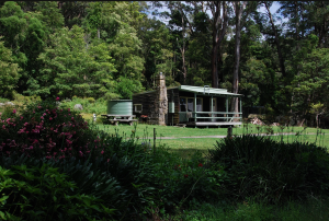 March 24-25 | Get to know the forest of the Illawarra escarpment