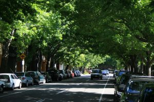 Street Trees – for a happier future