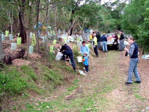 National Tree Day Tullimbah Landcare
