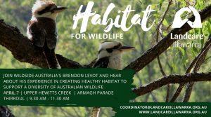 April 7 | Habitat for Wildlife | Upper Hewitts Creek Thirroul